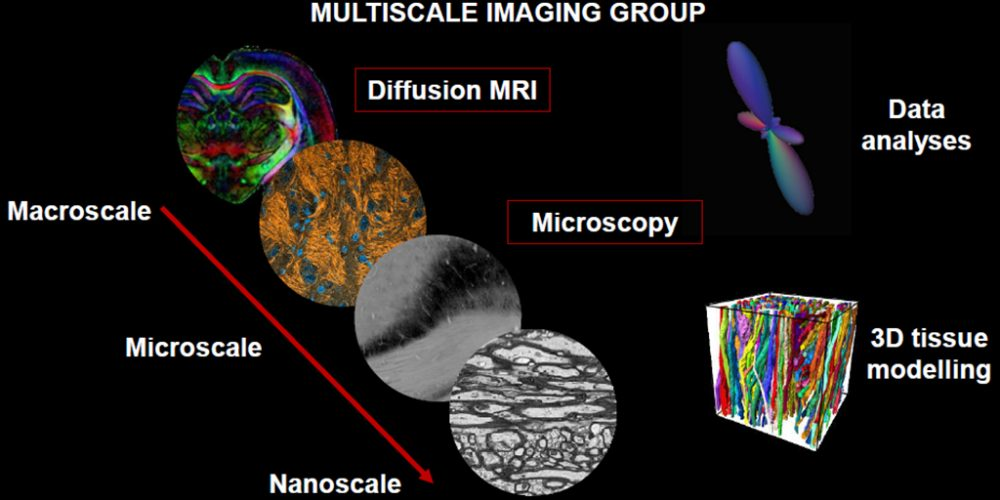 Introducing image of the group Multiscale Imaging Group
