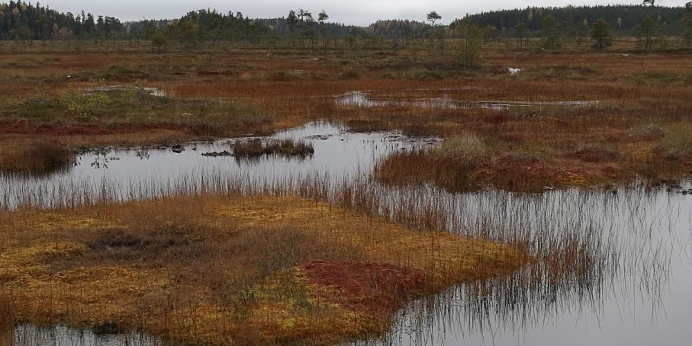 Introducing image of the group Peatland and Soil Ecology Research Group
