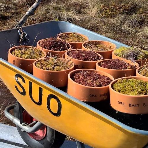 Image of  Suo- ja maaekologian tutkimusryhmä