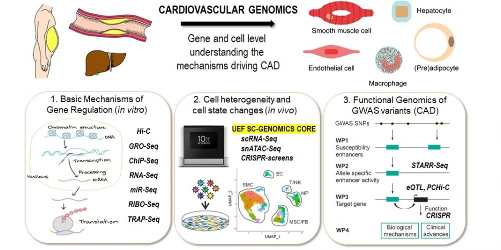 Introducing image of the group Cardiovascular Genomics (Kaikkonen lab)