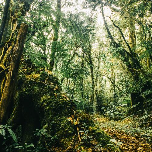 Image of  Poliittiset metsät – Mesoamerikan trooppisten sademetsien suojelu